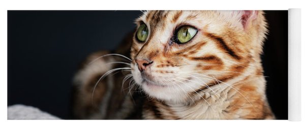 Bengal Cat Portrait Yoga Mat