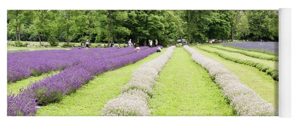 Lavender Farm Yoga Mat
