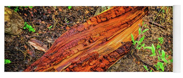 Yoga Mat featuring the photograph Wet Wood by Jon Burch Photography