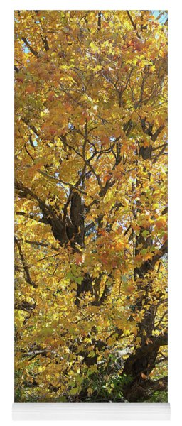 2018 Edna's Tree Up Close Yoga Mat