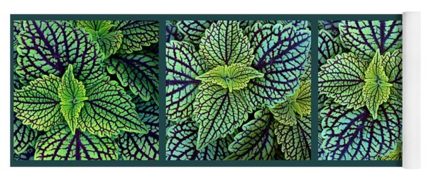 Yoga Mat featuring the photograph Verdure Triptych  by Jessica Jenney