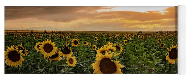 A Field Of Sunflowers At Sunset Yoga Mat