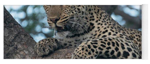 A Focused Leopard Yoga Mat