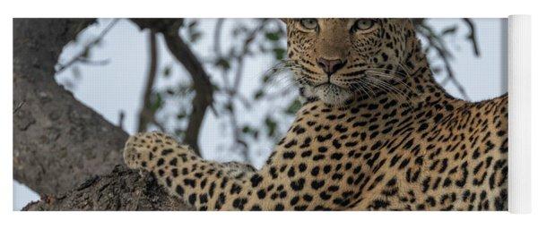 A Leopard Gazes From A Tree Yoga Mat