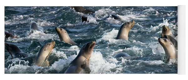 A Raft Of Sea Lions Yoga Mat