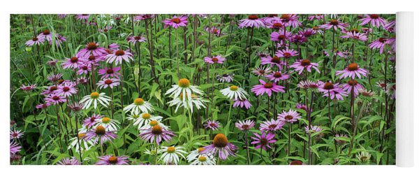 Yoga Mat featuring the photograph A Sea Of Echinacea Coneflowers by Tim Gainey