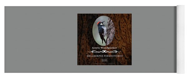 Acorn Woodpecker Granary Tree Yoga Mat
