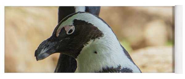 African Penguins Posing Yoga Mat