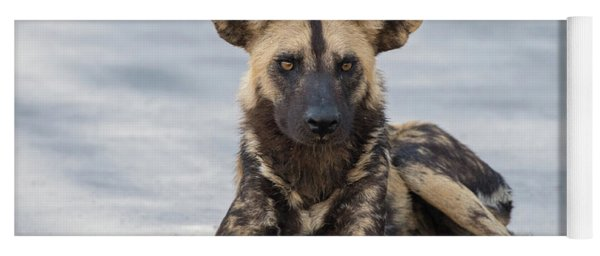 African Wild Dog Resting On A Road Yoga Mat