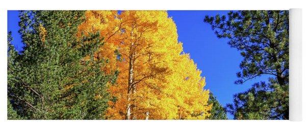 Arizona Aspens In Fall 4 Yoga Mat