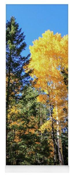 Arizona Aspens In Fall 5 Yoga Mat