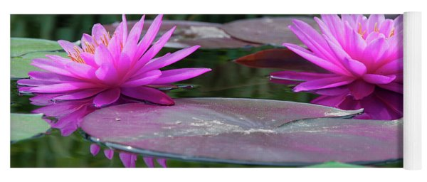 At Longwood Gardens - Water Lillies  Yoga Mat