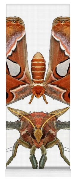 Atlas Moth5 Yoga Mat
