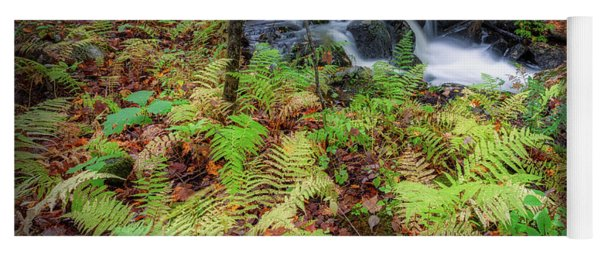 Yoga Mat featuring the photograph Autumn Fern by Bill Wakeley