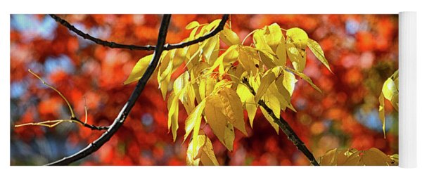 Yoga Mat featuring the photograph Autumn Foliage In Bar Harbor, Maine by Bill Swartwout Fine Art Photography
