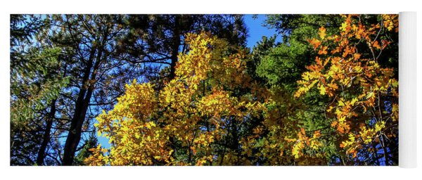 Autumn In Apache Sitgreaves National Forest, Arizona Yoga Mat