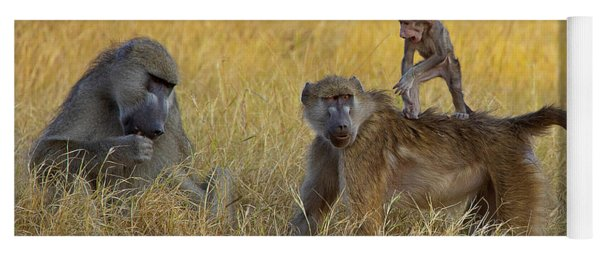 Baboons In Botswana Yoga Mat