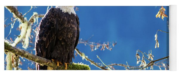 Backlit Bald Eagle In Squamish Yoga Mat