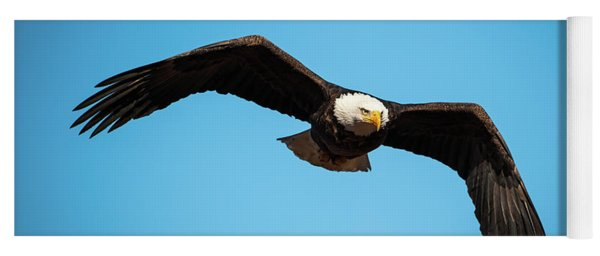 Bald Eagle In Flight  Yoga Mat