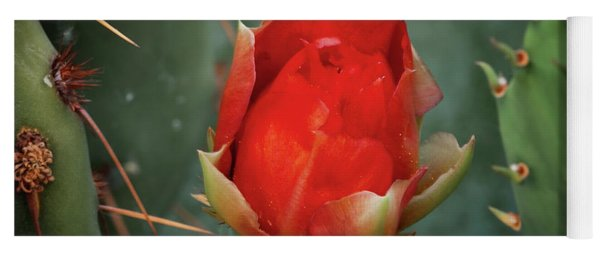 Yoga Mat featuring the photograph Be My Valentine by Rick Furmanek