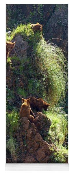Bears On A Rock Yoga Mat