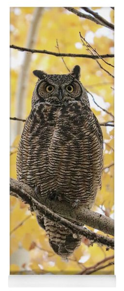 Beautiful Great Horned Owl In Autumn Tree Yoga Mat