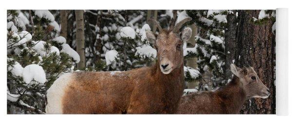 Bighorn Sheep In Deep Snow Yoga Mat