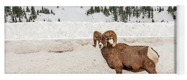 Bighorn Sheep Stopping Traffic Yoga Mat