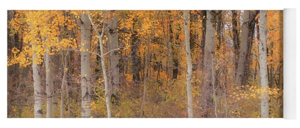 Birches In Autumn Yoga Mat