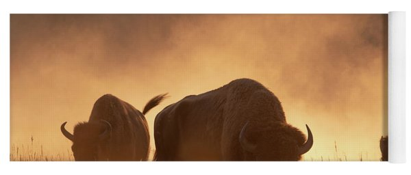 Bison In The Dust Yoga Mat