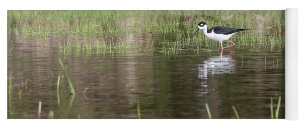 Black-necked Stilt 2018-1 Yoga Mat