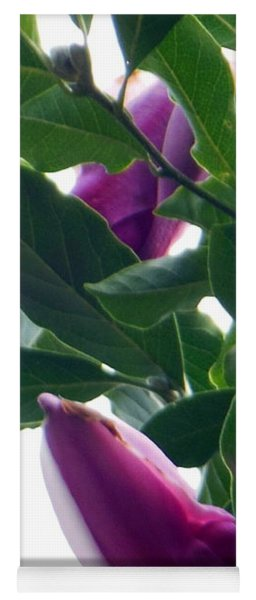 Yoga Mat featuring the photograph Blossoming Magnolias by Rockin Docks