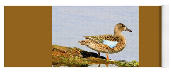 Blue-winged Teal Female Duck Yoga Mat