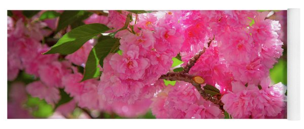 Yoga Mat featuring the photograph Bright Pink Blossoms by Lora J Wilson