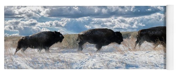 Buffalo Charge.  Bison Running, Ground Shaking When They Trampled Through Arsenal Wildlife Refuge Yoga Mat