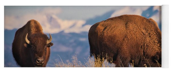Buffalo Grazing At Dawn Yoga Mat