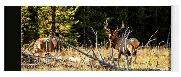 Bull Elk Yoga Mat