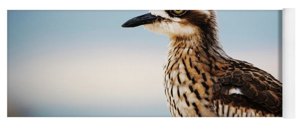 Bush Stone-curlew Resting On The Beach. Yoga Mat