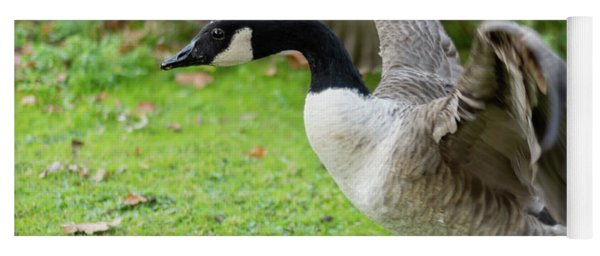 Yoga Mat featuring the photograph Canadian Goose With Wings Stretched by Scott Lyons