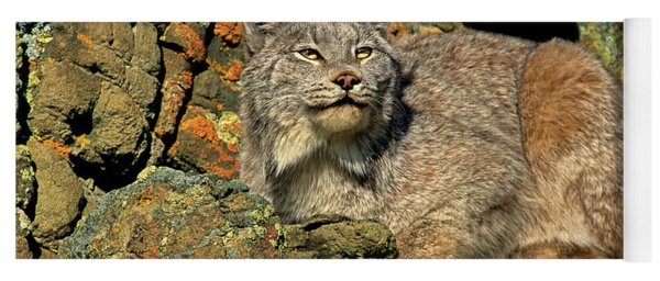 Canadian Lynx On Lichen-covered Cliff Endangered Species Yoga Mat