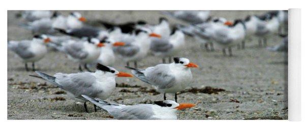 Caspian Terns Yoga Mat