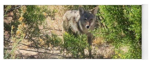 Cautious Coyote Yoga Mat