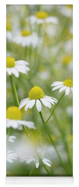 Yoga Mat featuring the photograph Chamomile Flowers by Tim Gainey