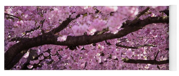 Cherry Blossom Tree Panorama Yoga Mat