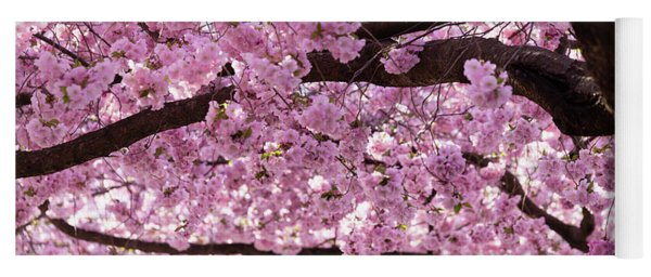 Cherry Blossom Trees Yoga Mat