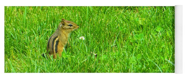 Chipmunk And The Flower Yoga Mat