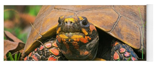 Close Up Of Red Face Box Turtle, Porto Yoga Mat