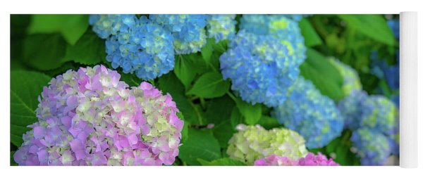 Yoga Mat featuring the photograph Colorful Hydrangeas by Lora J Wilson