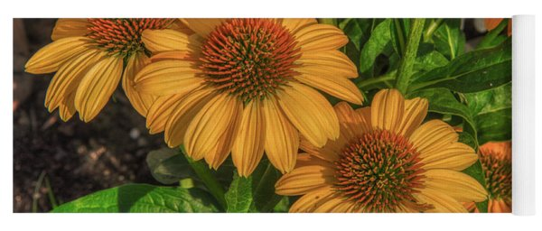 Yoga Mat featuring the photograph Coneflowers  by Guy Whiteley