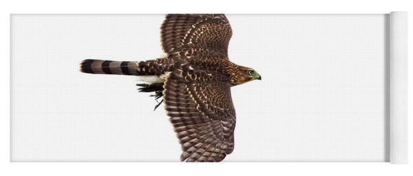 Cooper's Hawk With Prey Yoga Mat